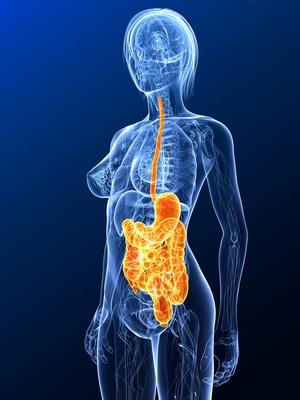 Grafik mit durchsichtiger Frau in blau, bei der Speiseröhre, Magen und Darm orangefarben sind