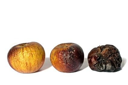 Foto mit 3 Äpfeln von leicht schrumpelig bis schwarz verschimmelt