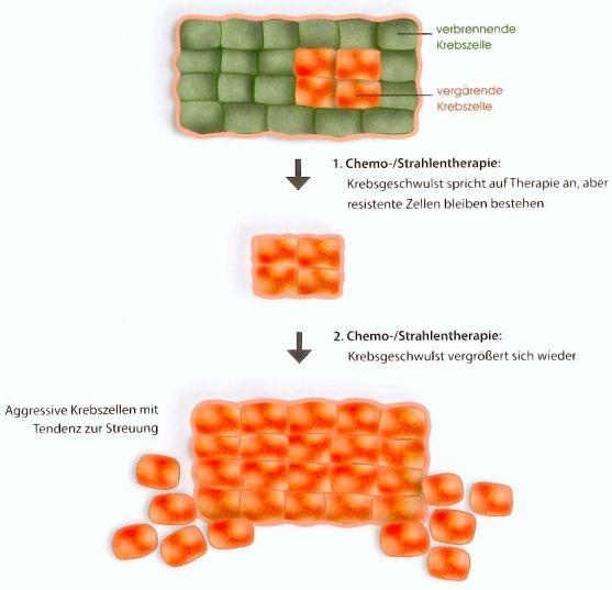 Grafik mit symbolischen Krebszellen, bei denen vergärende Zellen die 1.Chemotherapie überstehen und bei der 2.Chemo sich vermehren und streuen